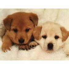 Medium_dog-puppys